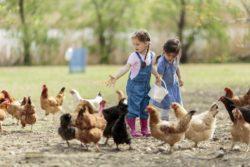 CDU-Fraktion setzt sich weiter für Bauernhofkindergarten ein